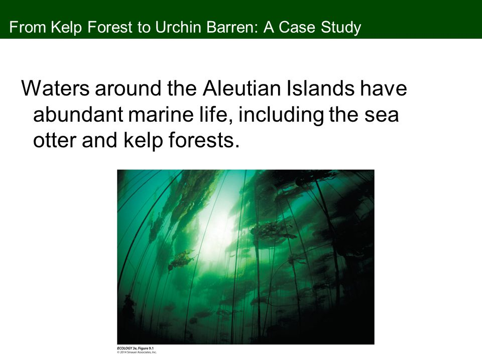 From Kelp Forest to Urchin Barren: A Case Study