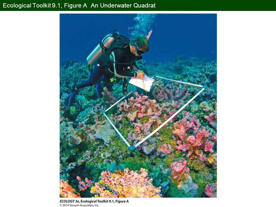 Ecological Toolkit 9.1, Figure A An Underwater Quadrat