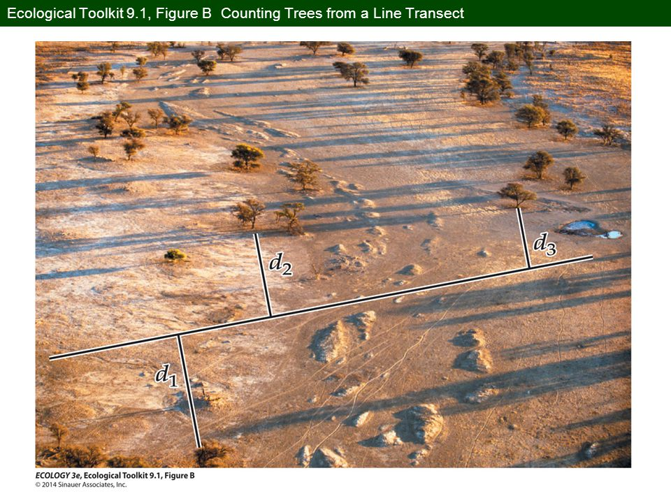 Ecological Toolkit 9.1, Figure B Counting Trees from a Line Transect