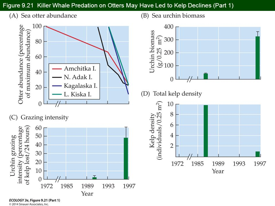 Figure 9.21 Killer Whale Predation on Otters May Have Led to Kelp Declines (Part 1)