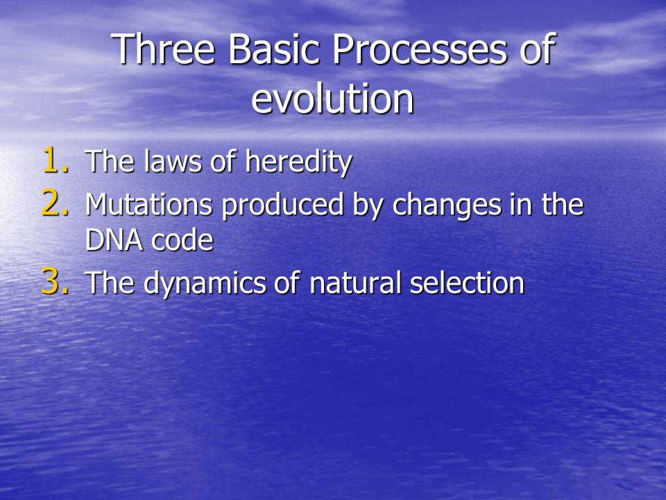 Three Basic Processes of evolution