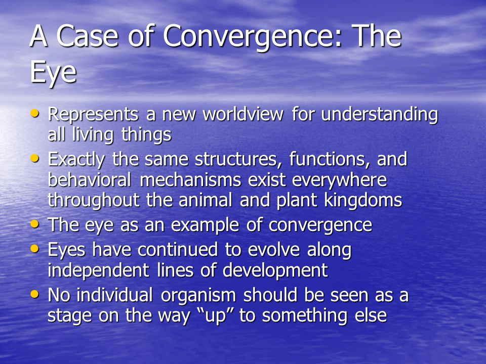 A Case of Convergence: The Eye