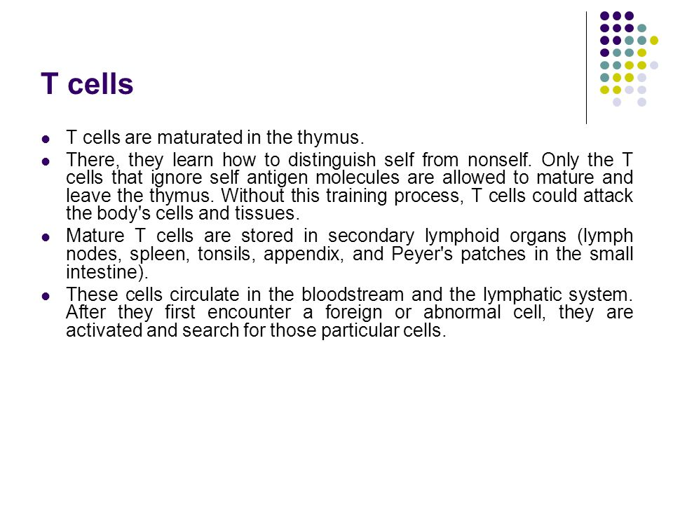 T cells T cells are maturated in the thymus.