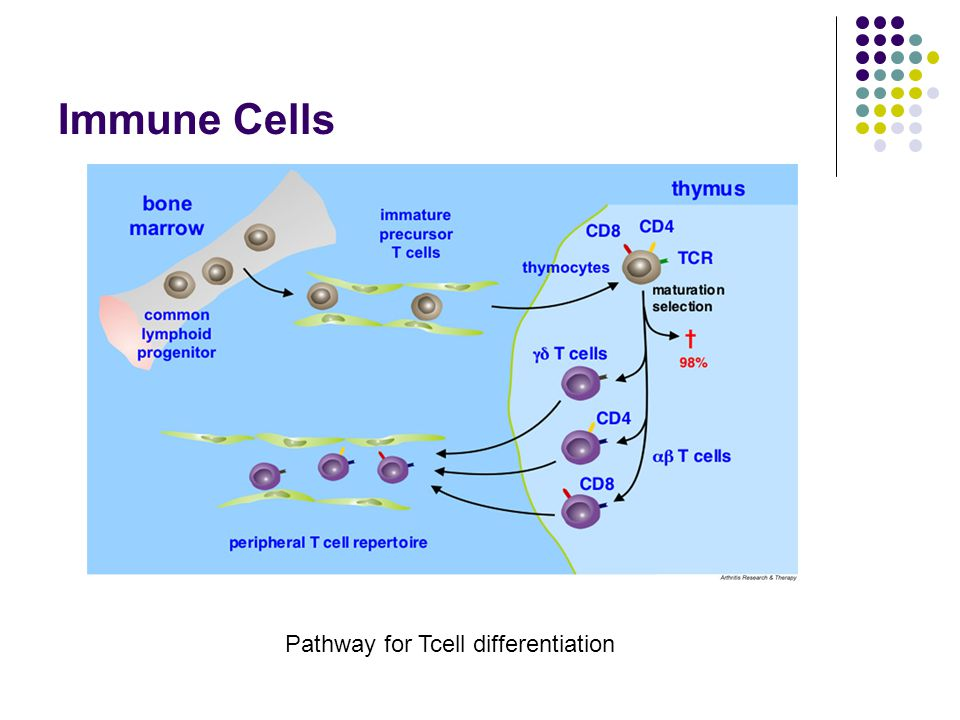 Immune Cells Pathway for Tcell differentiation