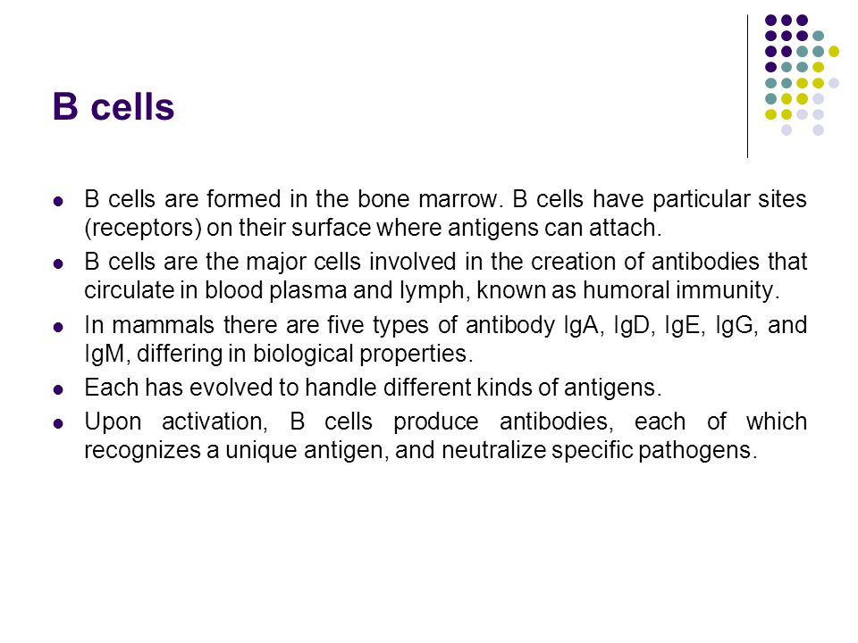 B cells B cells are formed in the bone marrow. B cells have particular sites (receptors) on their surface where antigens can attach.