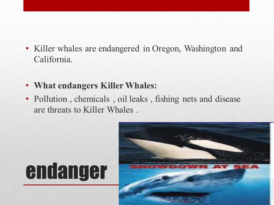 Killer whales are endangered in Oregon, Washington and California.