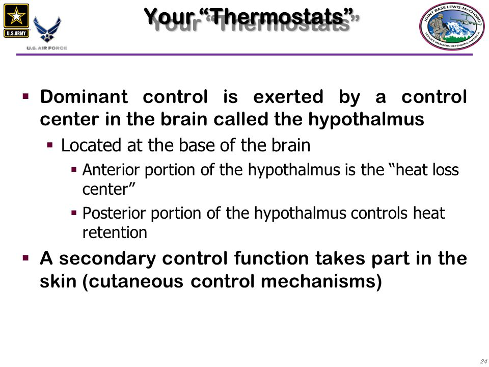 Your Thermostats Dominant control is exerted by a control center in the brain called the hypothalmus.