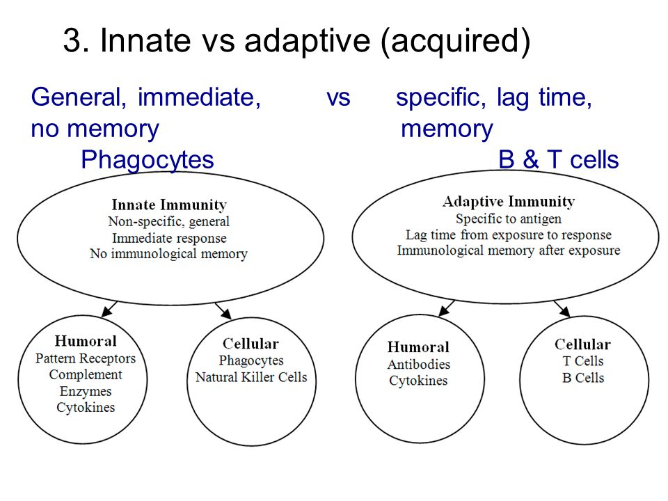 3. Innate vs adaptive (acquired)
