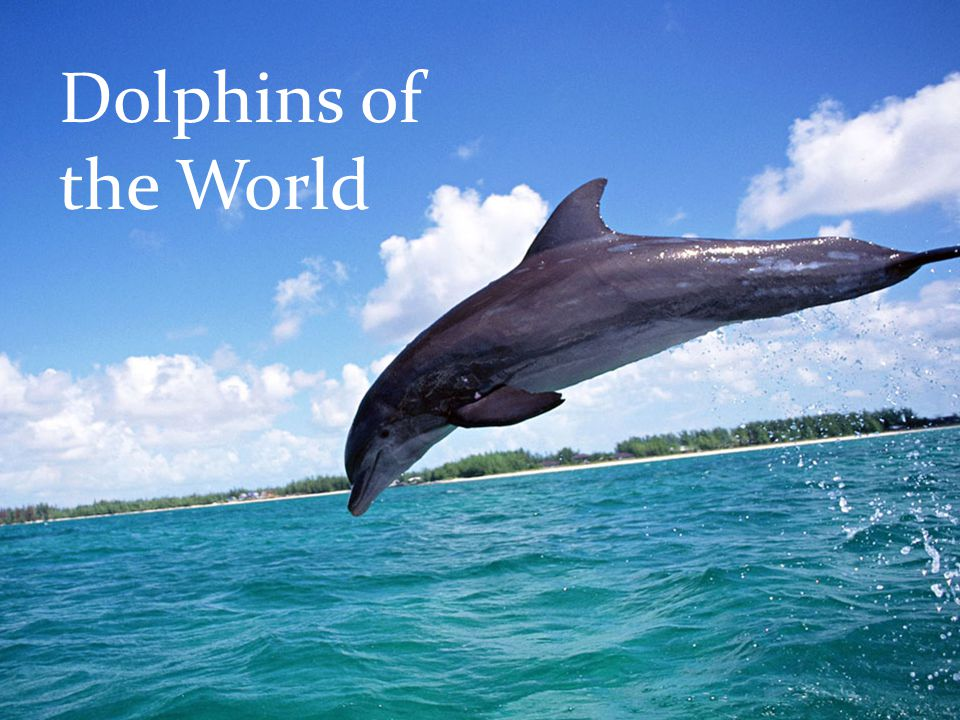 Dolphins of the World
