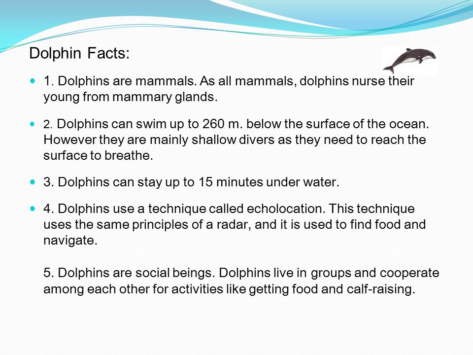 Dolphin Facts: 1. Dolphins are mammals. As all mammals, dolphins nurse their young from mammary glands.