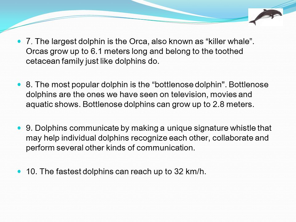 7. The largest dolphin is the Orca, also known as killer whale