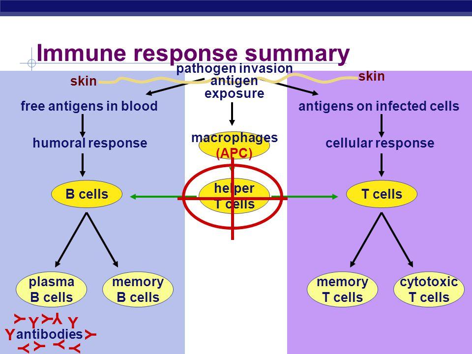 Immune response summary