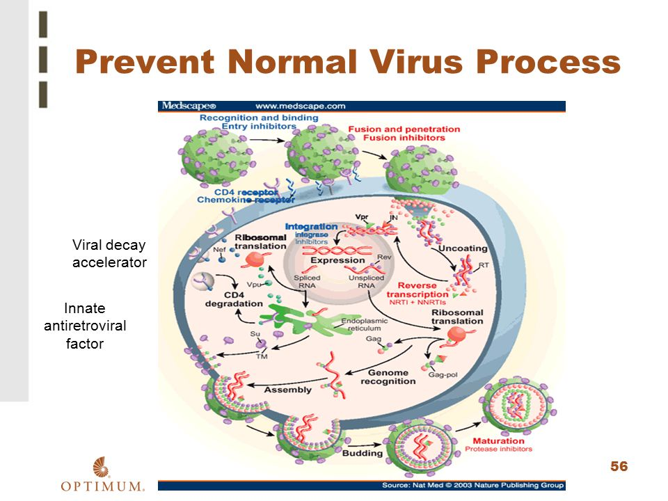 Prevent Normal Virus Process