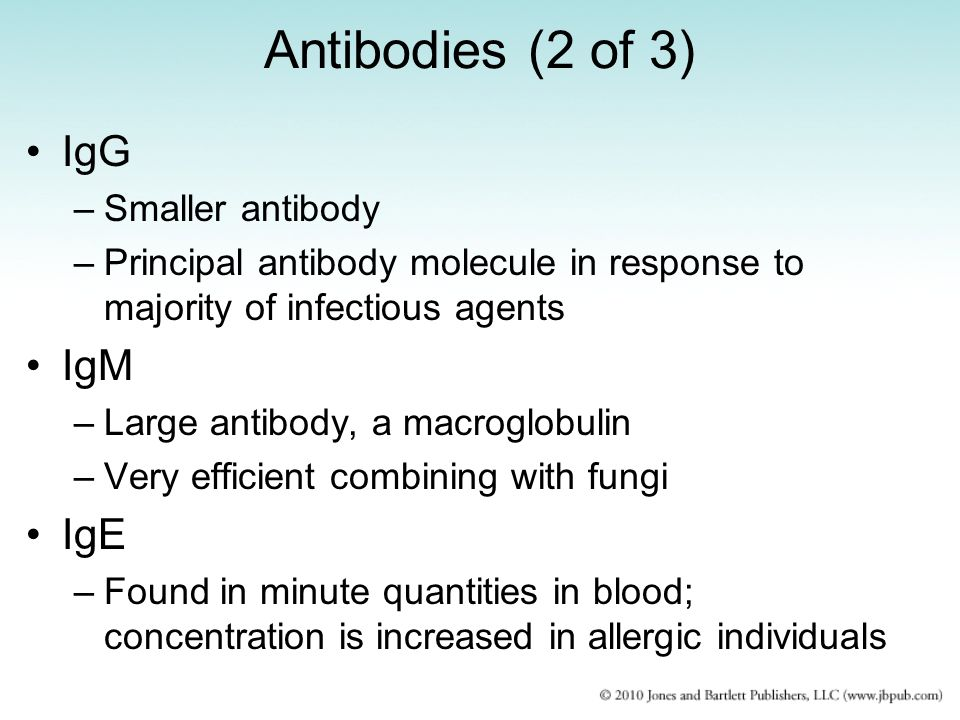 Antibodies (2 of 3) IgG IgM IgE Smaller antibody