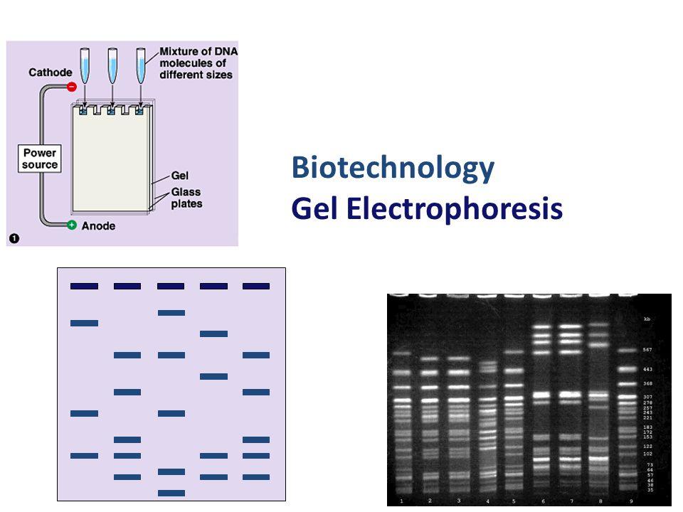 Biotechnology Gel Electrophoresis 2006-2007