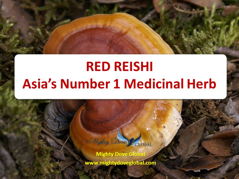 RED REISHI Asia's Number 1 Medicinal Herb