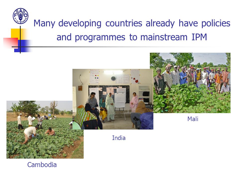 Many developing countries already have policies and programmes to mainstream IPM