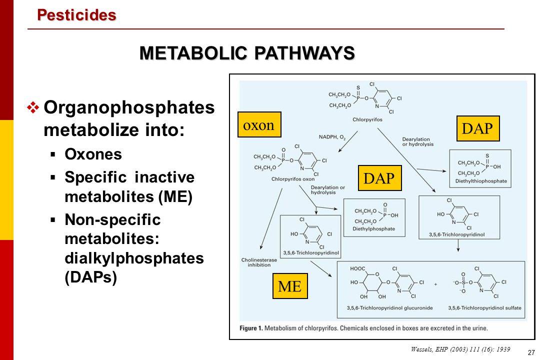 Organophosphates metabolize into: