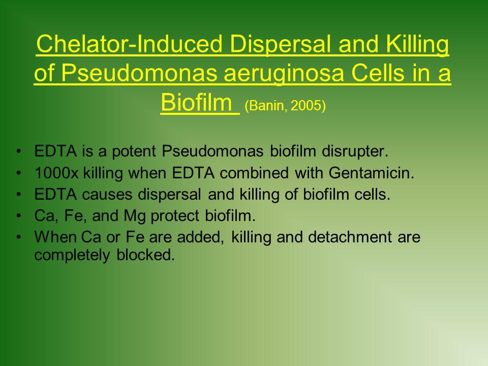Chelator-Induced Dispersal and Killing of Pseudomonas aeruginosa Cells in a Biofilm (Banin, 2005)