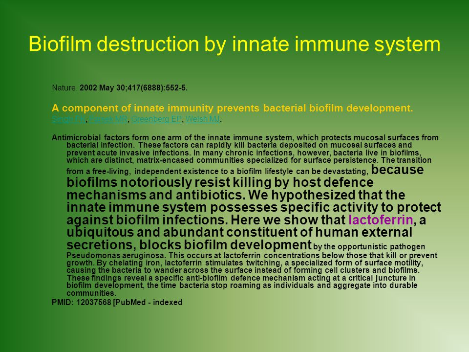 Biofilm destruction by innate immune system
