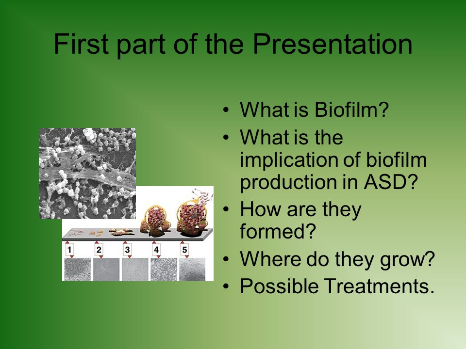 First part of the Presentation