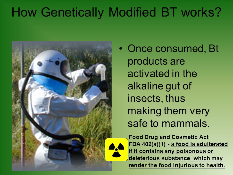 How Genetically Modified BT works