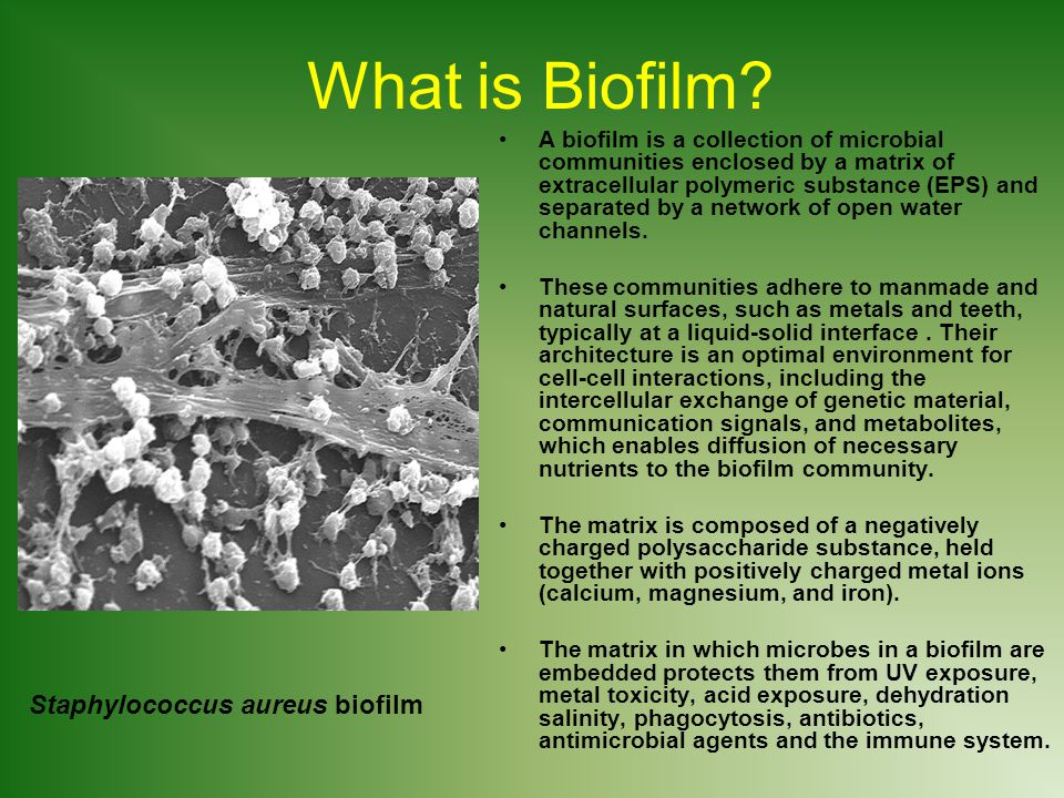 What is Biofilm Staphylococcus aureus biofilm