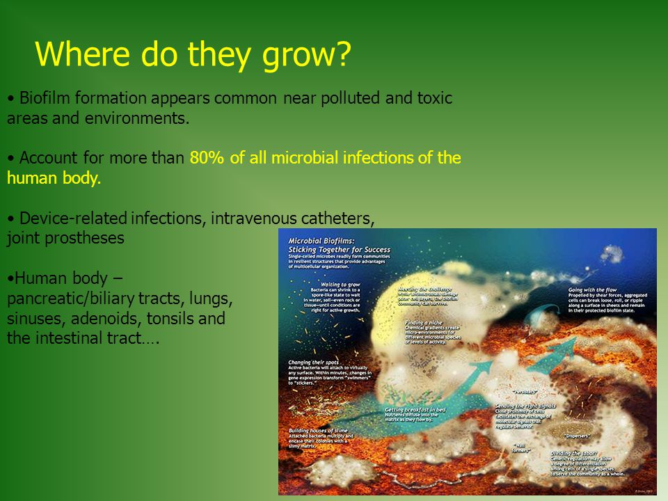 Where do they grow Biofilm formation appears common near polluted and toxic areas and environments.
