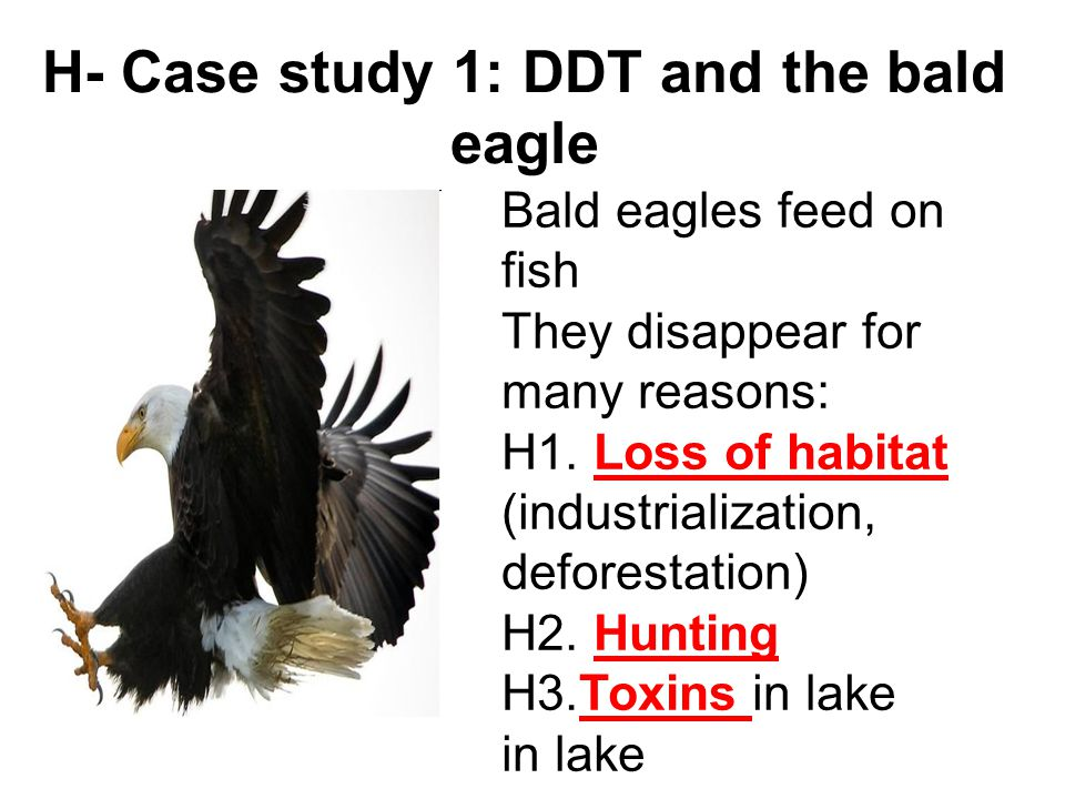 H- Case study 1: DDT and the bald eagle