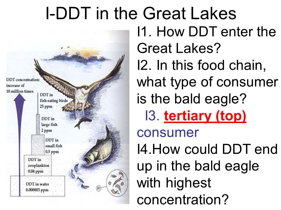 I-DDT in the Great Lakes