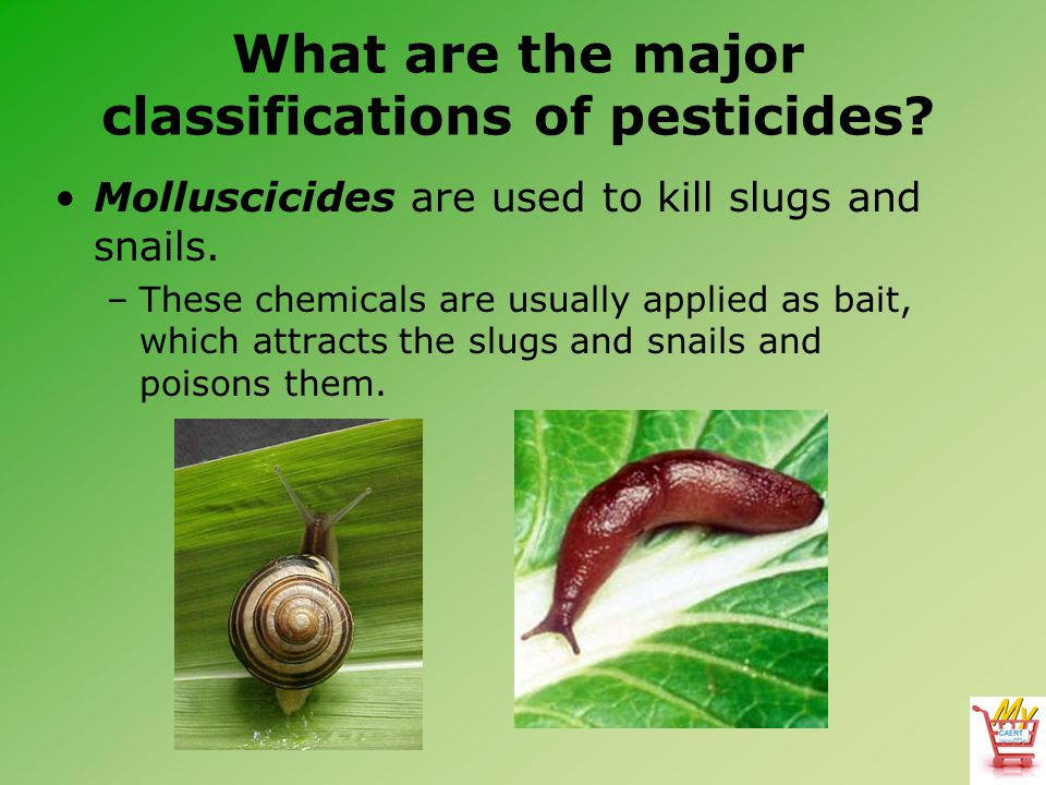 What are the major classifications of pesticides