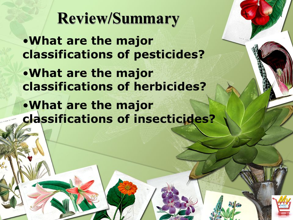 Review/Summary What are the major classifications of pesticides