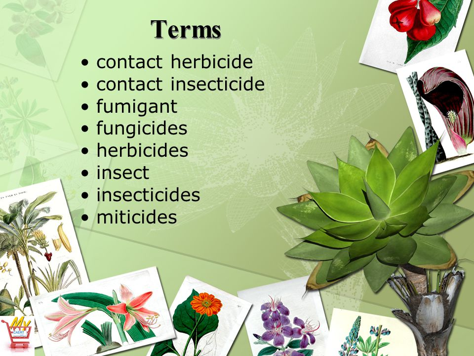 Terms contact herbicide contact insecticide fumigant fungicides