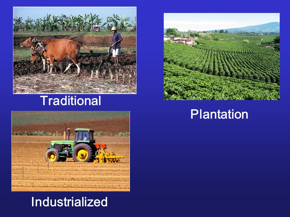 Traditional Plantation Industrialized