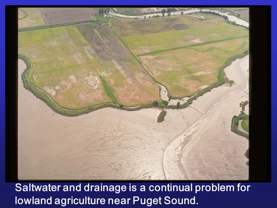 Saltwater and drainage is a continual problem for lowland agriculture near Puget Sound.