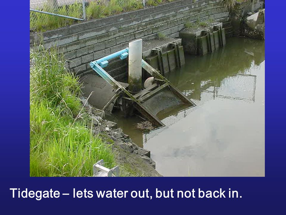 Tidegate – lets water out, but not back in.