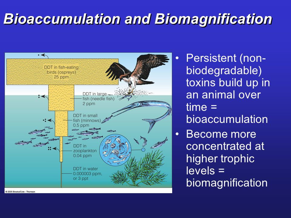 Bioaccumulation and Biomagnification