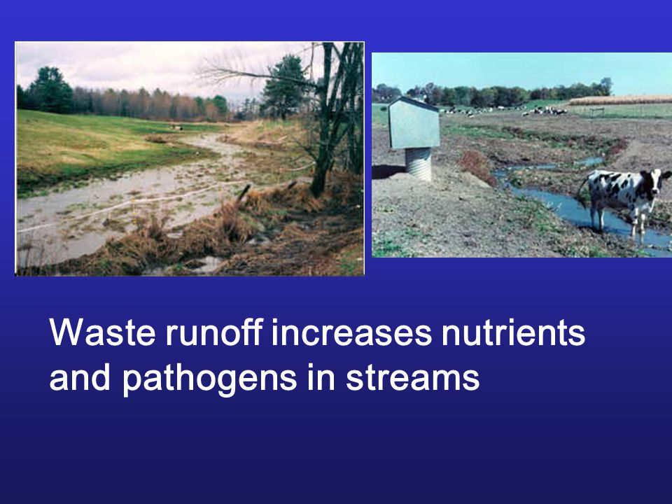 Waste runoff increases nutrients