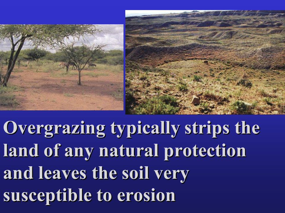 Overgrazing typically strips the land of any natural protection and leaves the soil very susceptible to erosion
