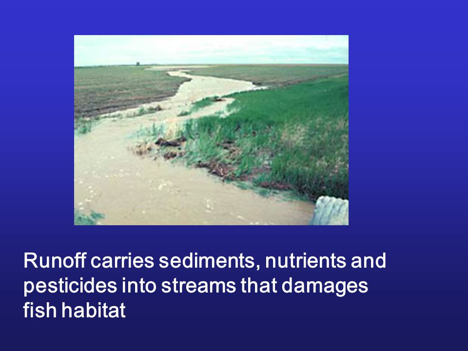 Runoff carries sediments, nutrients and