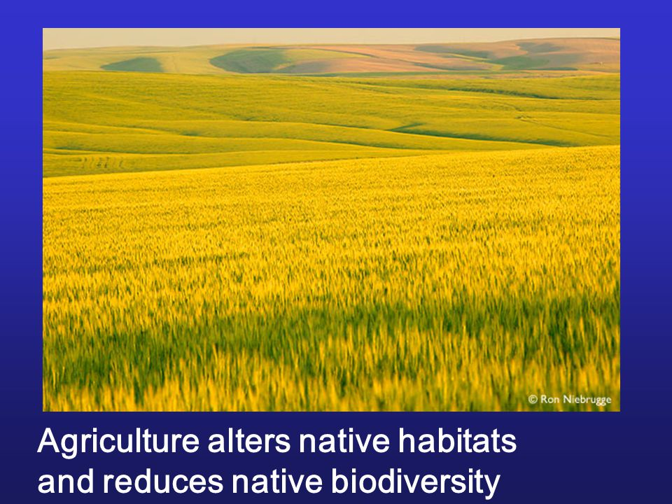 Agriculture alters native habitats
