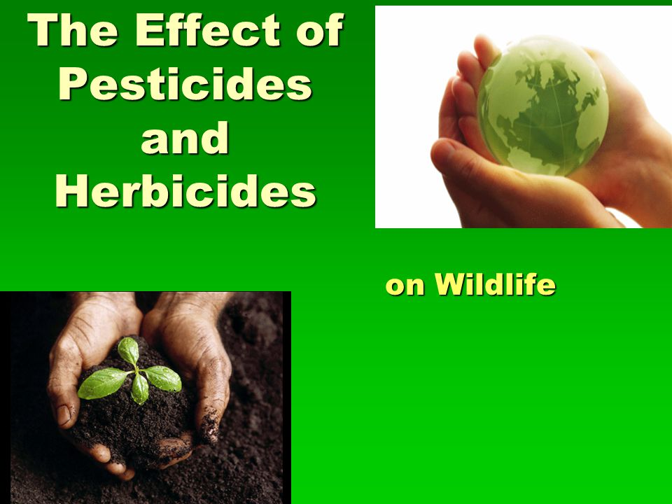 The Effect of Pesticides and Herbicides