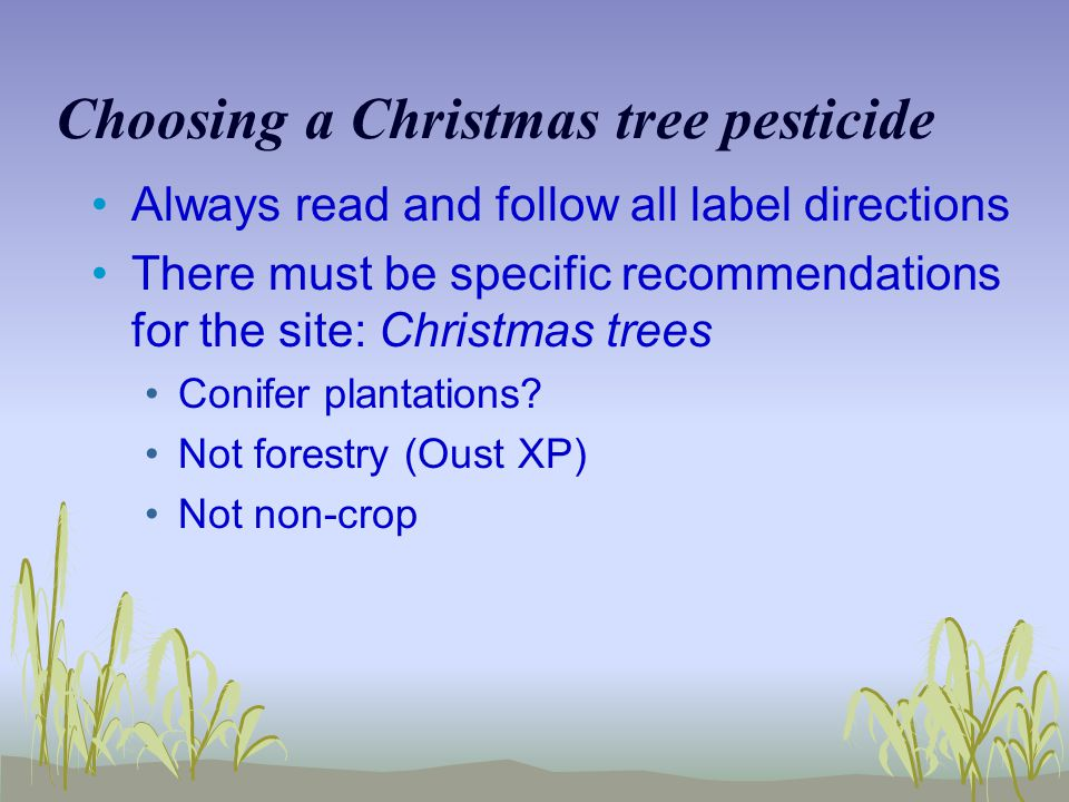 Choosing a Christmas tree pesticide