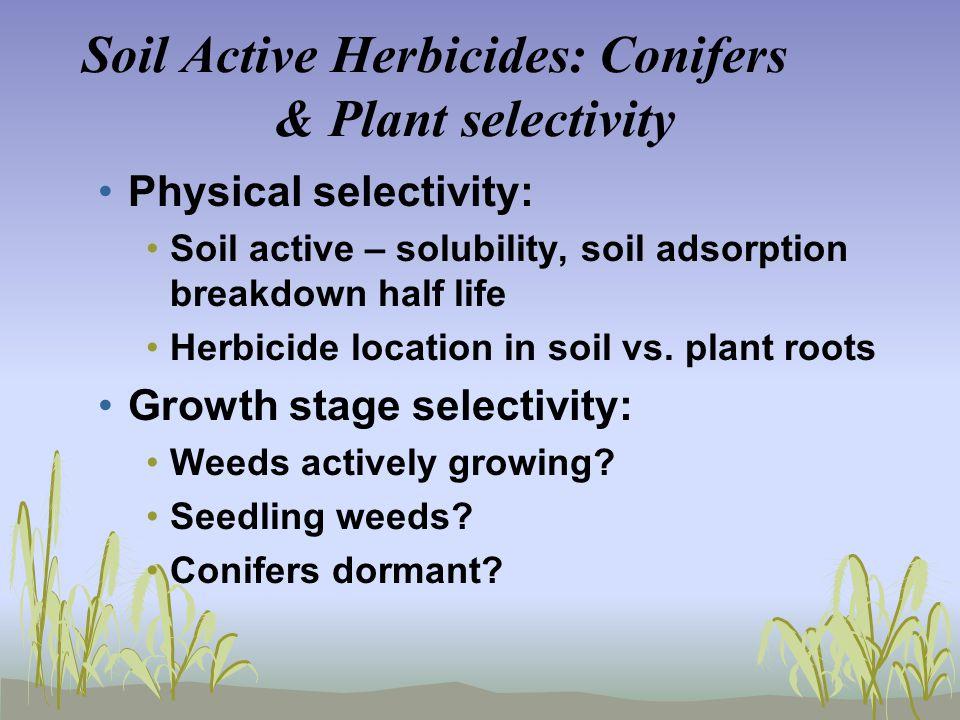 Soil Active Herbicides: Conifers & Plant selectivity