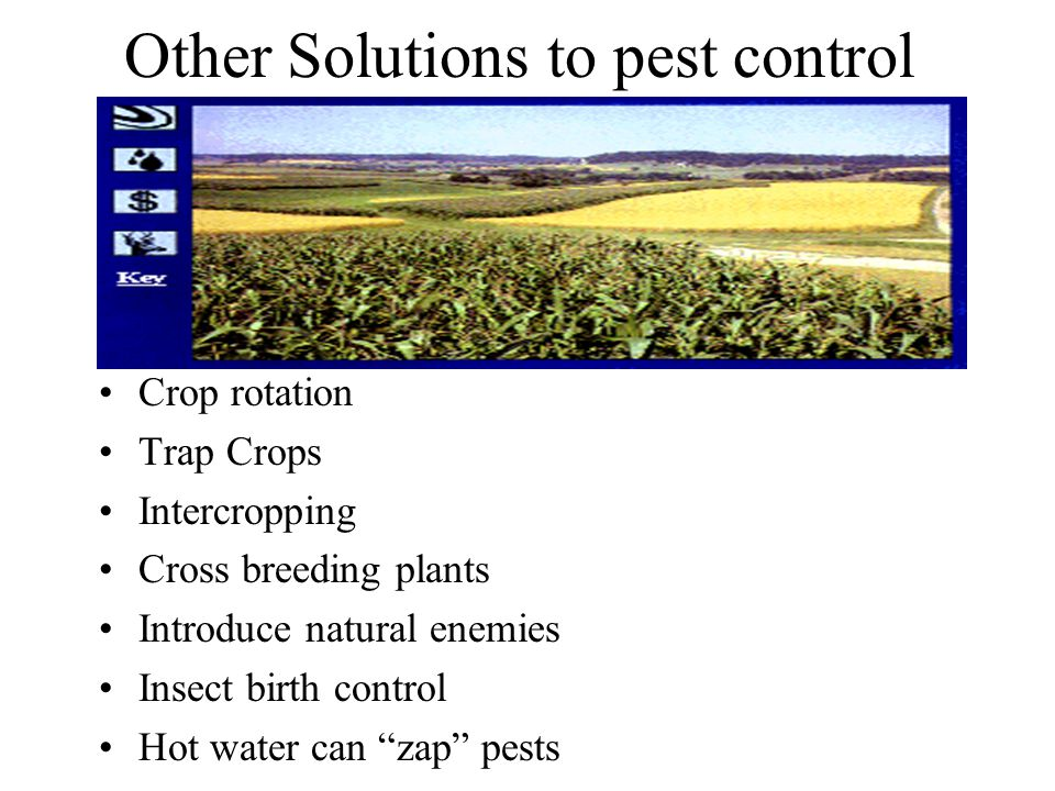 Other Solutions to pest control