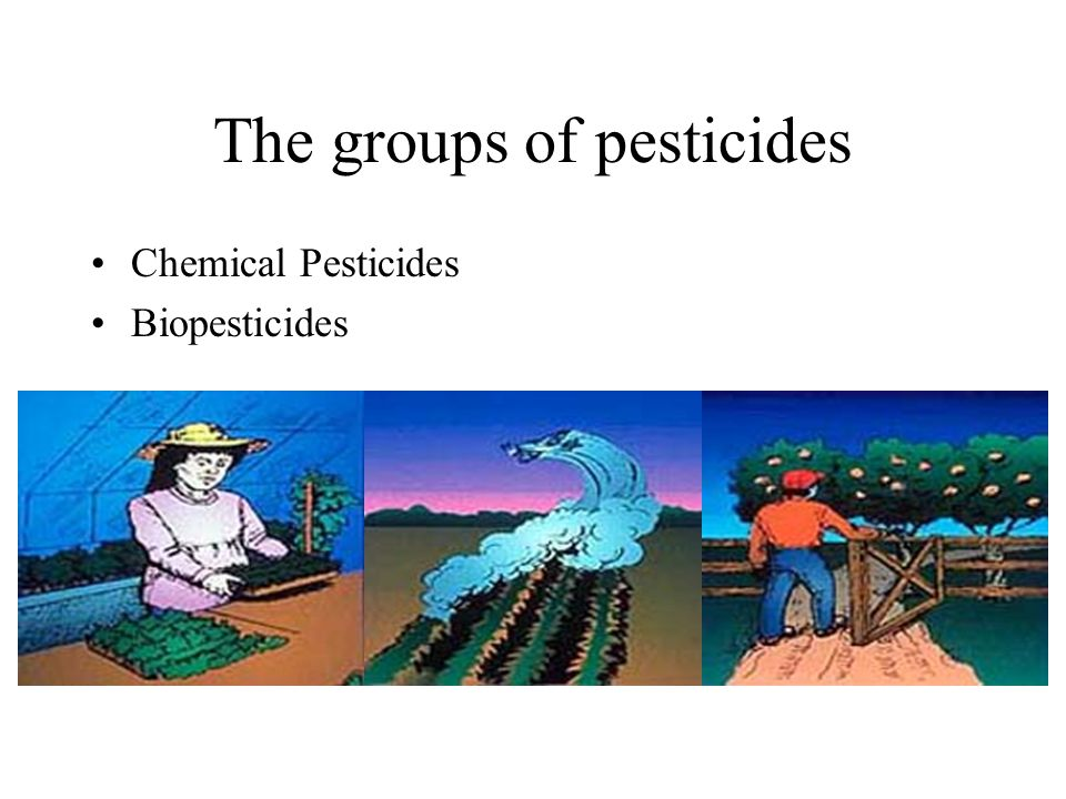 The groups of pesticides
