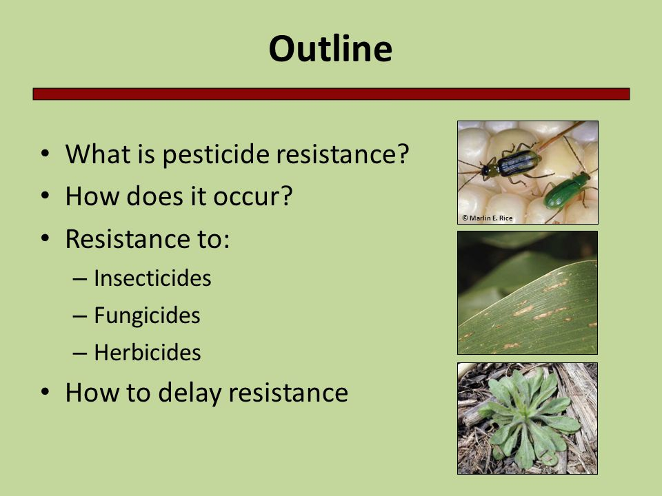 Outline What is pesticide resistance How does it occur