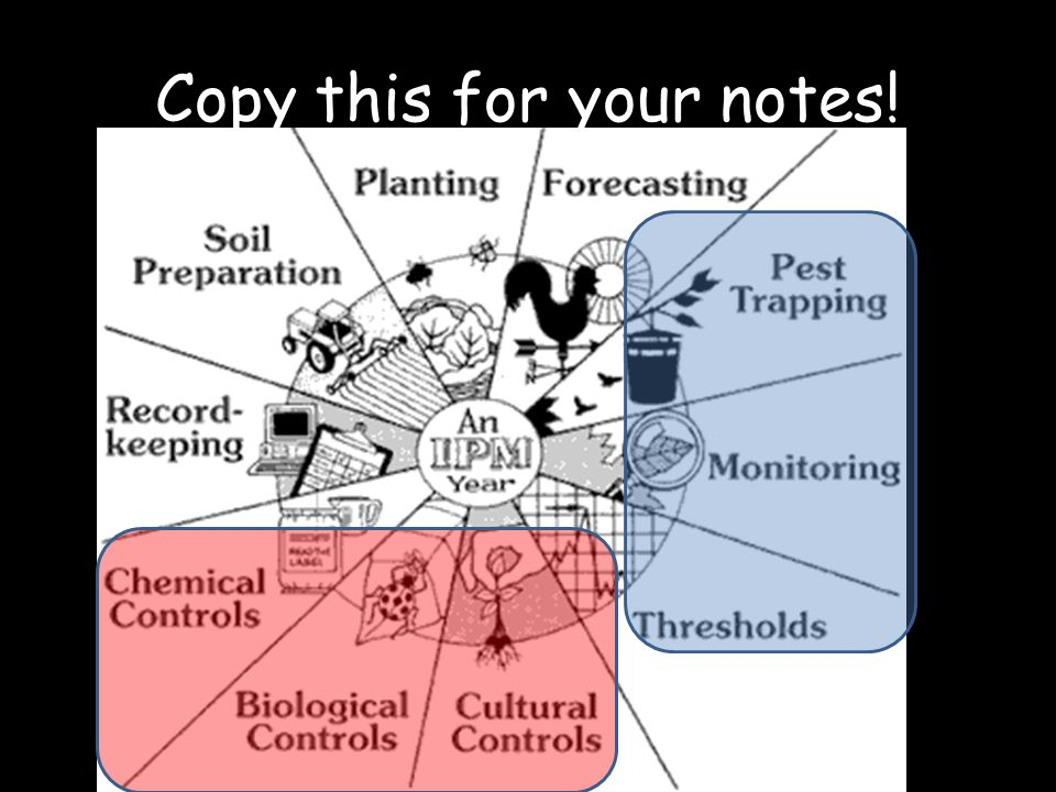 Copy this for your notes!