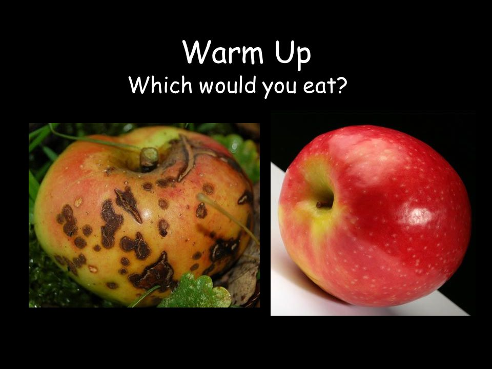Warm Up Which would you eat