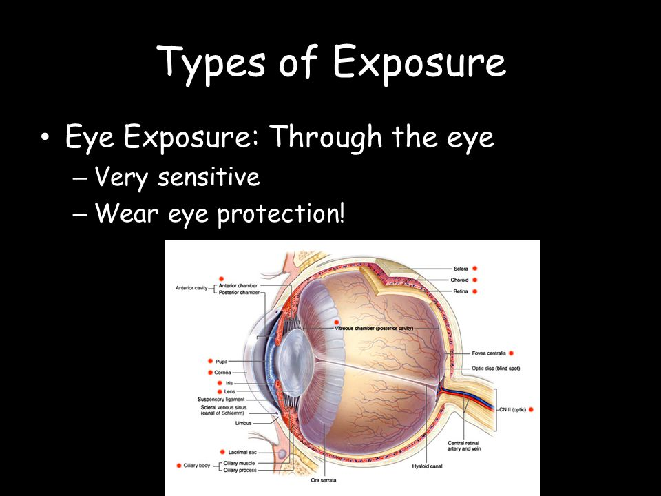Types of Exposure Eye Exposure: Through the eye Very sensitive
